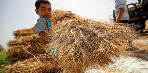 Egypt's GASC draws seven offers in wheat purchase tender