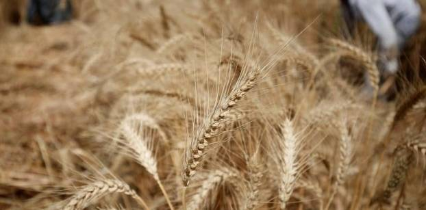Egypt's GASC receives offers at wheat tender -trade