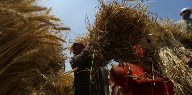 Egypt's GASC says buys 360,000 tonnes of Russian, Ukrainian and Romanian wheat