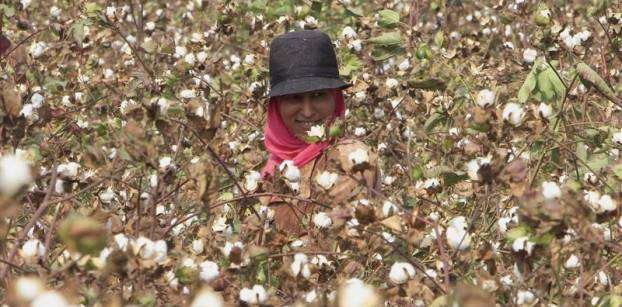 Egypt's cotton exports fall by 54.2 pct in 2nd quarter of agricultural season - agency