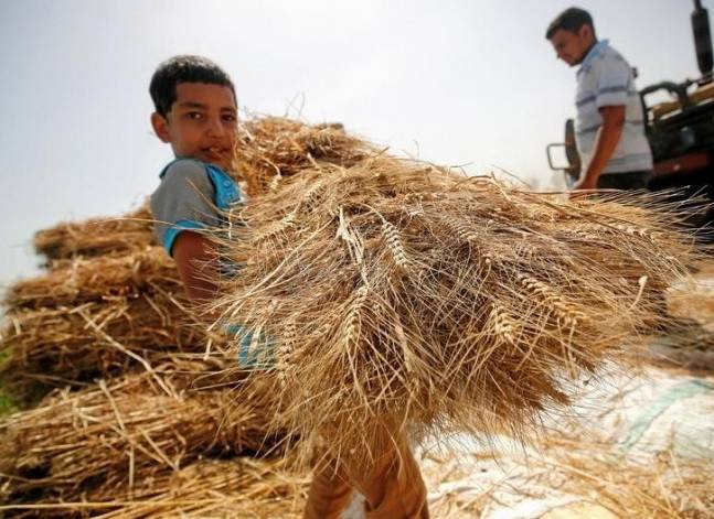Egypt's GASC says seeks wheat for Sept. 26 to Oct. 5 shipment