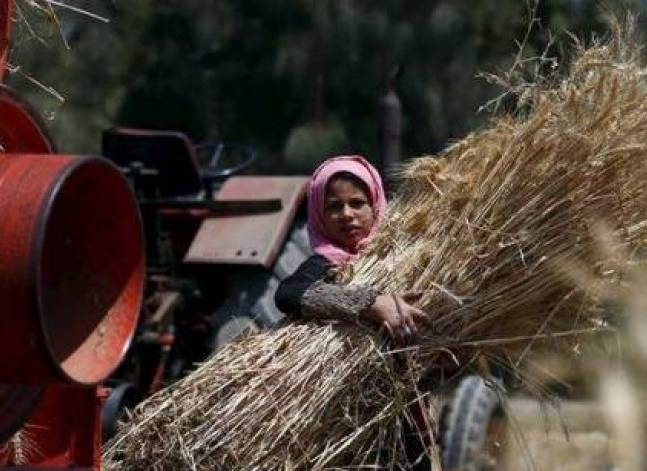 Egypt's wheat reserves sufficient until early February 2017 - ministry