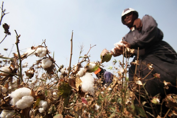 Egypt to export long staple cotton to Ukraine in exchange for wheat - state agency