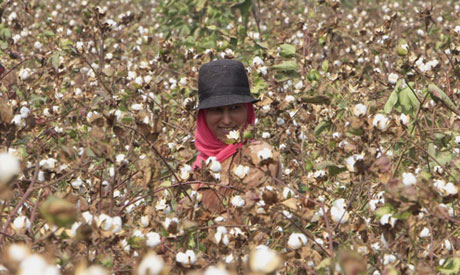 Egyptian cotton exports nearly double in second agricultural quarter - statistics agency