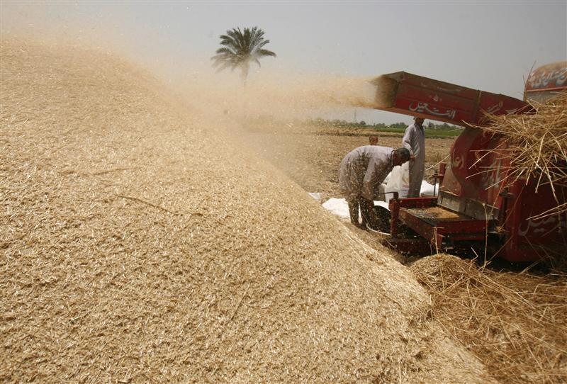 Egypt strikes Ukraine from approved wheat supply list