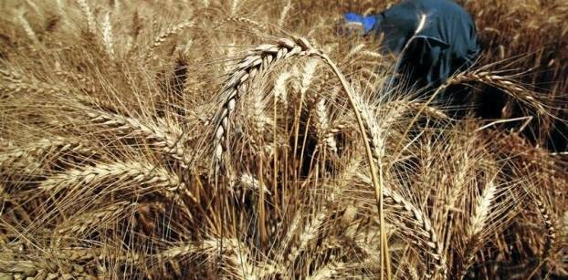 الزراعة تعين رئيسا جديدا لإدارة الحجر الزراعي