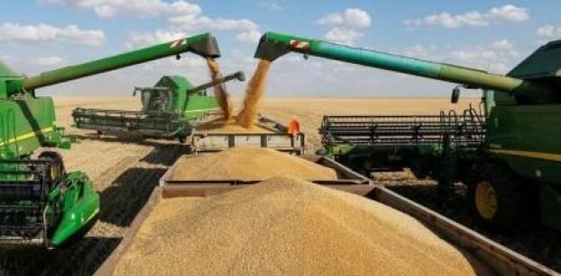 مصر تطرح مناقصة لشراء كمية غير محددة من القمح