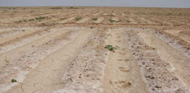 مهلة 6 أشهر لمالكي أراضي الإصلاح الزراعي لسداد الأقساط المتأخرة بدون غرامة
