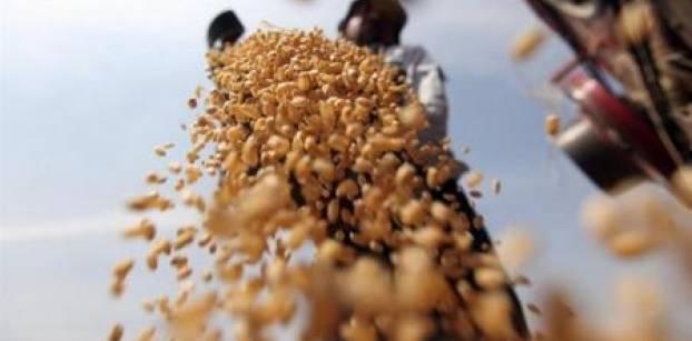 تعيين رئيس جديد للحجر الزراعي بعد أزمة رفض شحنات القمح المستوردة