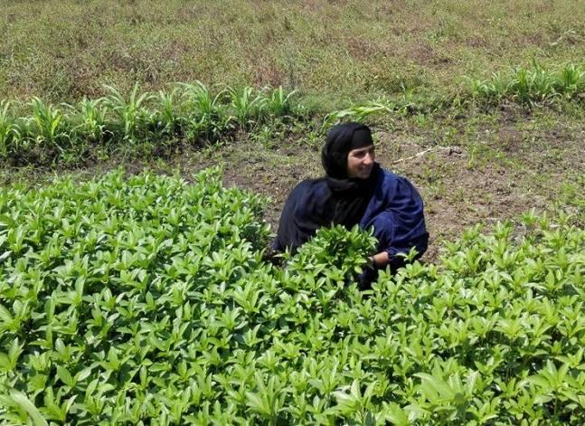 مصريات على رصيف الحياة: السرير أقفاص فاكهة والأمنيات كشك صغير ورحلة حج