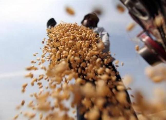 مصر تشتري 60 ألف طن من القمح الأوكراني في مناقصة