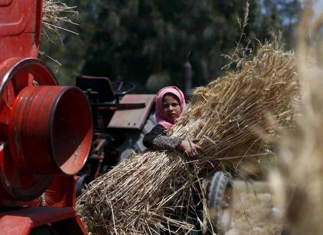 وزير الزراعة: نستهدف زيادة إنتاج القمح المحلي إلى 10 ملايين طن