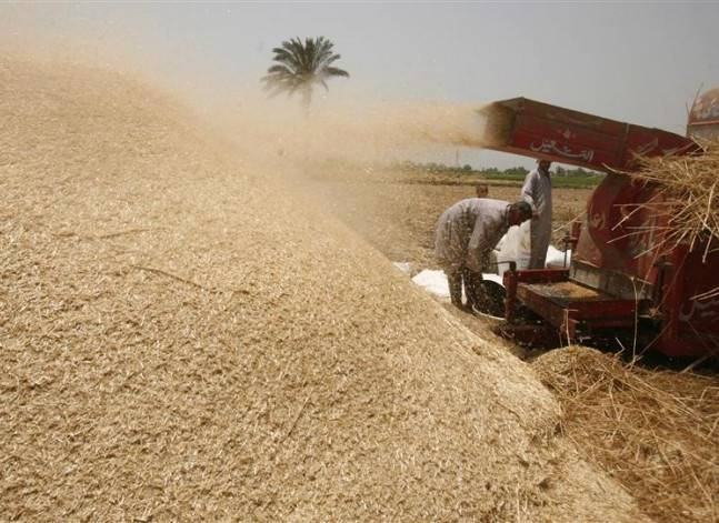 مقابلة- مسؤول: لم نلغِ دور الحجر الزراعي والصحي في فحص واردات القمح